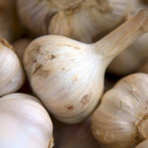 5 Masalah Kesehatan Akibat Konsumsi Bawang Putih