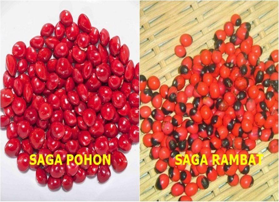 Buah Saga, Makanan Anak 90-an