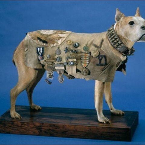 Sersan Stubby, Pahlawan Perang Berkaki Empat