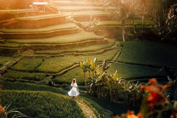10 Wisata Ladang Sawah Paling Cantik di Indonesia