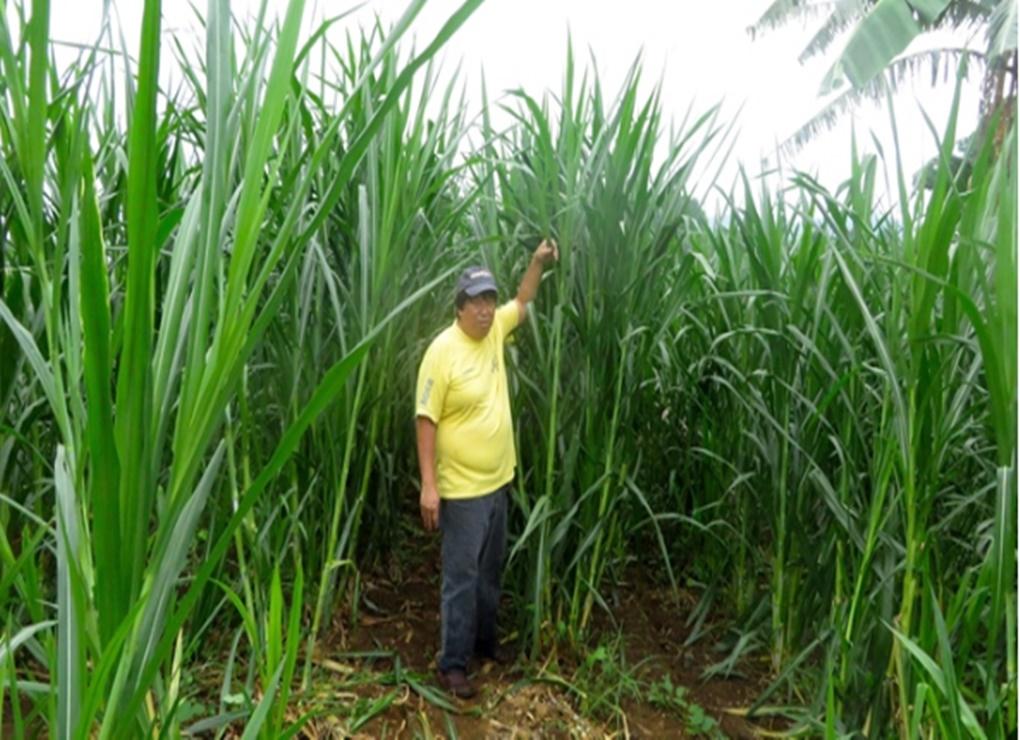 Cuma Tanam Rumput, Petani Ini Raup Omset Miliaran